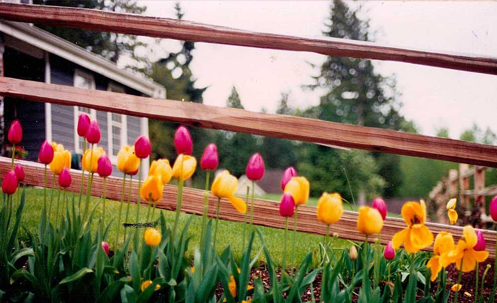 Split cedar 3-rail fence